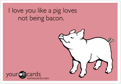 pig_somee cards