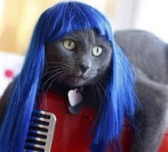 cat_wigs_07