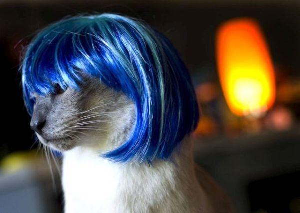 cat_wigs_08