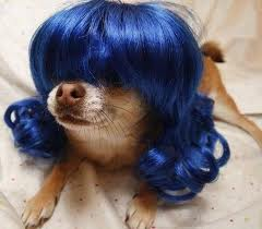 wigs for dogs01