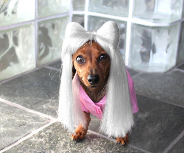wigs for dogs02